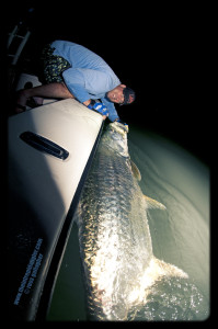 Jason-Tarpon-Forced-Prespecitve-IA-199x300 Southwest Florida Tarpon Season In Full Swing 2014 Reports Fishing Reports