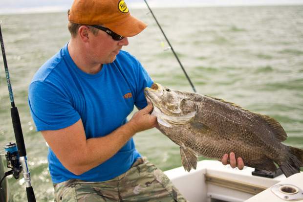 How to fillet tripletail 4 tips with capt scott lum for Triple tail fish