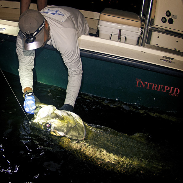 Jay-Tarpon-Boatside-Lift-WM-1200-620x620 In A Game Of Kings - Southwest Florida May Tarpon Report 2015 Reports Fishing Reports