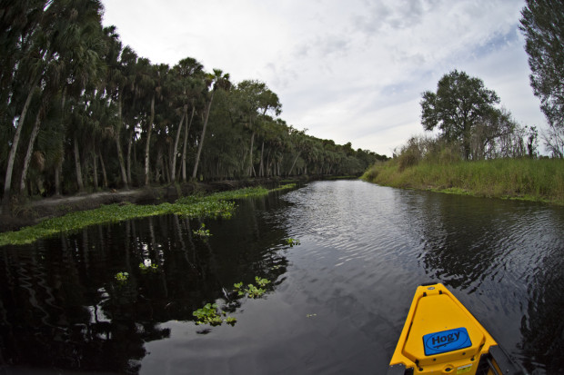 Hobie-Myakka-River-Downstream-1200-620x413 Tent Camping and Kayak Fishing The Myakka River State Park Blog