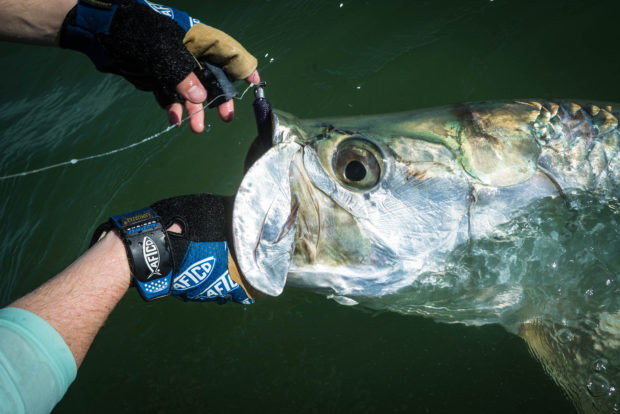 Aftco-Beach-Tarpon-Grip-620x414 5 Tips For Fall Tarpon Success 2016 Reports Fishing Reports How-To Inshore Fishing