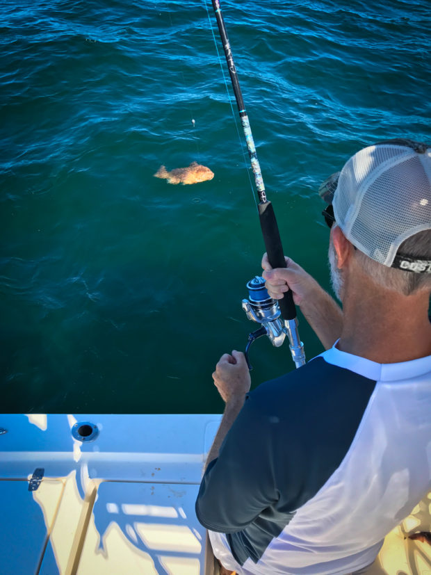 Red-Grouper-Hookup-Sewell-Rods-620x827 3 Techniques for Fall Nearshore Grouper Fishing 2016 Reports Blog Fishing Reports How-To Offshore Fishing