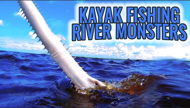 SAWFISH-THUMBNAIL800-800x454 Kayak Fishing: Caloosahatchee River Monster 2017 Reports Fishing Reports Videos