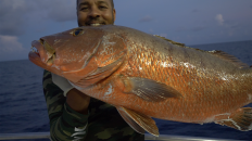 Dry Tortugas Party Boat Fishing