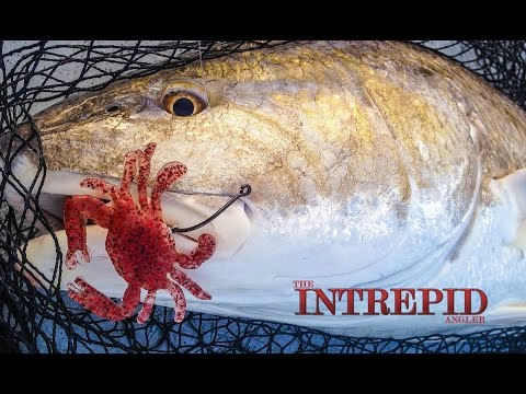 best-crab-baits-for-redfish-lure Best Crab Baits For Redfish - Lures For Bull Reds 2014 Reports Fishing Reports Product Reviews Tarpon Videos Videos