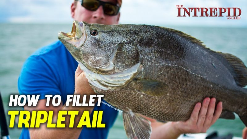 how-to-fillet-tripletail-4-tips-800x450 How To Fillet Tripletail - 4 Tips With Capt. Scott Lum Fish Filleting How-To Videos