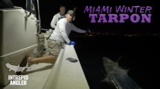 Miami Tarpon Fishing Hogy Lures