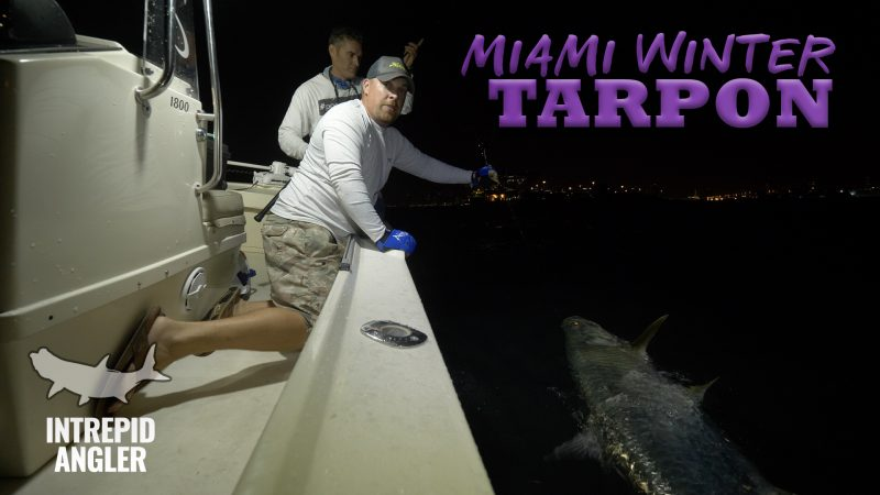 MIAMI-TARPON-THUMB-800x450 Miami Tarpon Fishing 2018 Reports Fishing Reports Tarpon Videos Videos