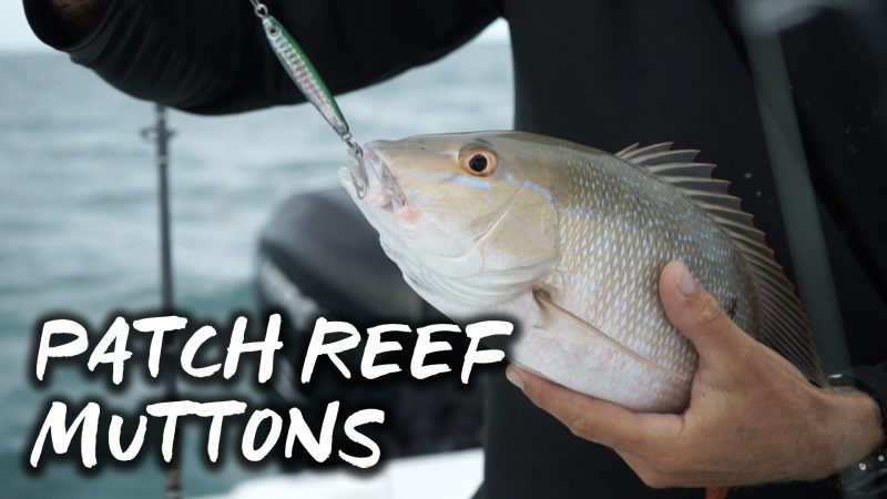MUTTON-THUMB-800x450 Florida Keys Patch Reef Mutton Snapper How-To Inshore Fishing Videos