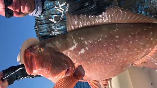 Sea-Daddy-Red-Grouper3