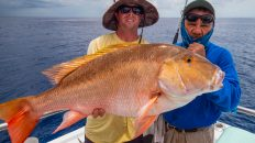 Dry Tortugas Mutton Snapper Sea Trek