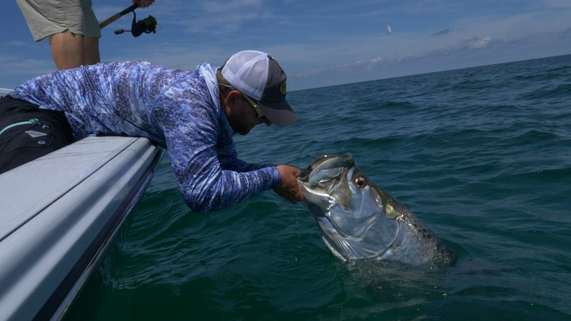 Minnow-Run-Tarpon-800x450 Video: Minnow Run Tarpon 2018 Reports Fishing Reports Tarpon Videos Videos