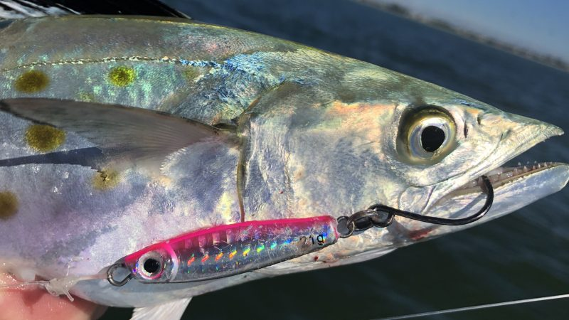 Spanish-Thumb-800x450 Video: Fall Run Spanish Mackerel Fishing 2018 Reports Fishing Reports How-To Inshore Fishing Videos