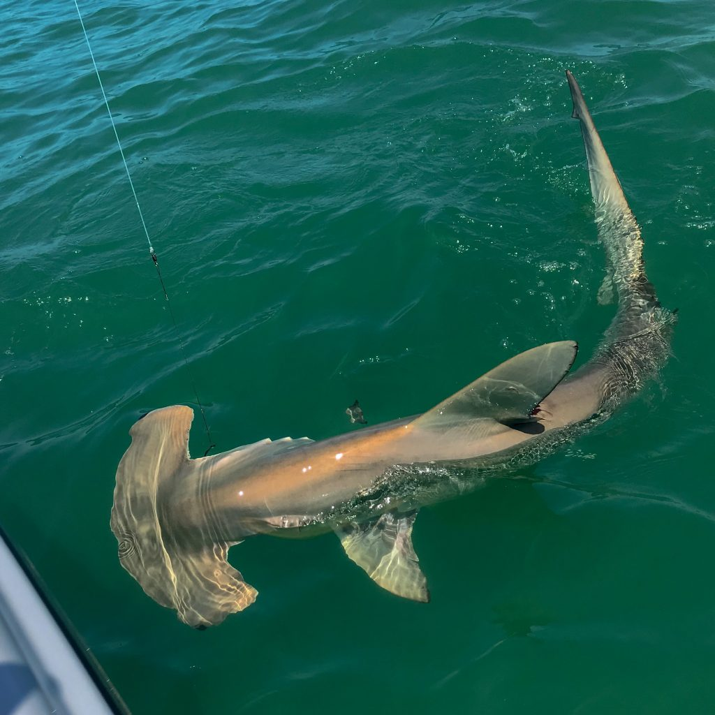 IMG_2980-1024x1024 April Fishing Report: Sanibel, Captiva, Pine Island Sound, Cape Coral, Fort Myers 2019 Reports Fishing Reports